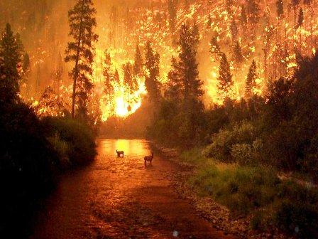 Muğlada bir Orman yangını daha
