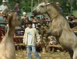 Atları hiç böyle görmemiştik