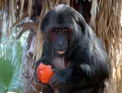 Turistlerin ilgi odağı olan maymun