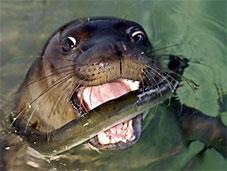 Badem, gözünü balıklara dikti