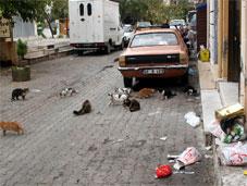 Sokaklar kedi kaynıyor