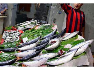 Av yasağı bitti, balık fiyatları düştü