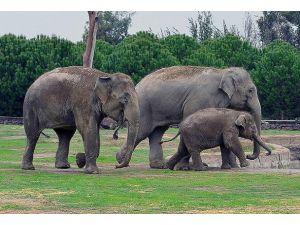Hindistanda tren fil sürüsüne çarptı