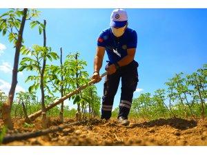 Muğla Büyükşehir'den Muğlalı Çiftçilere Ceviz Fidanı Desteği