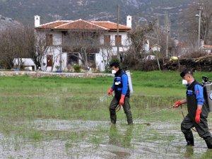 Karabağlar'da 350 Hektar Sulak Alanda Vektör Mücadelesi