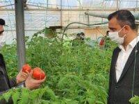 CHP'li Erbay: Rusya'ya domates ihracatı önündeki kota engeli kaldırılması için gerekli girişimler başlatılmalı