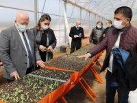Menteşe Belediyesi Bitkilerini Kendi Serasında Üretiyor