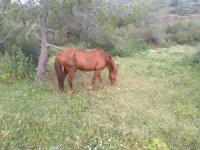 Yaralı Atın Tedavisi Tamamlandı