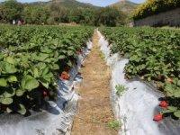 Bodrum Belediyesi, Tezgaha Çıkarılamayan Ürünleri Halka Ulaştırıyor