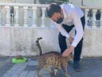 Ak Partililer Sokak Hayvanlarına Mama Dağıttı