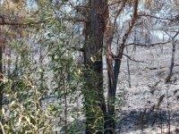 İşte yangın bölgesinde son durum